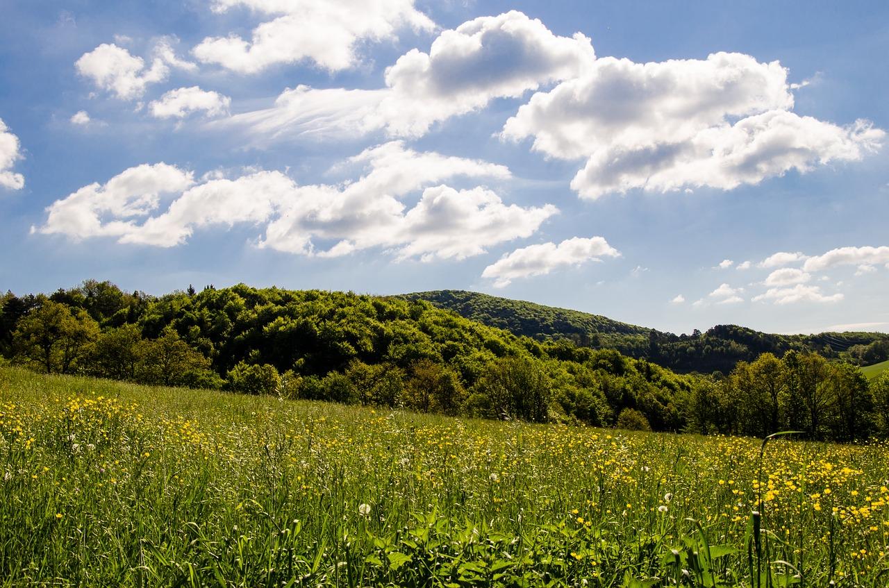 meadow-3289586_1280